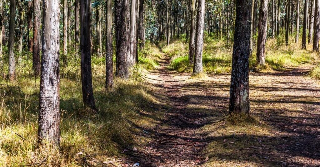 Path? What Path? | focuswithmarlene.com