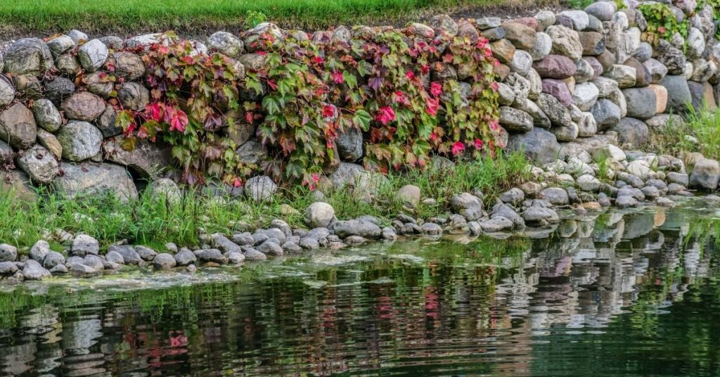 stone wall with ivy and pond